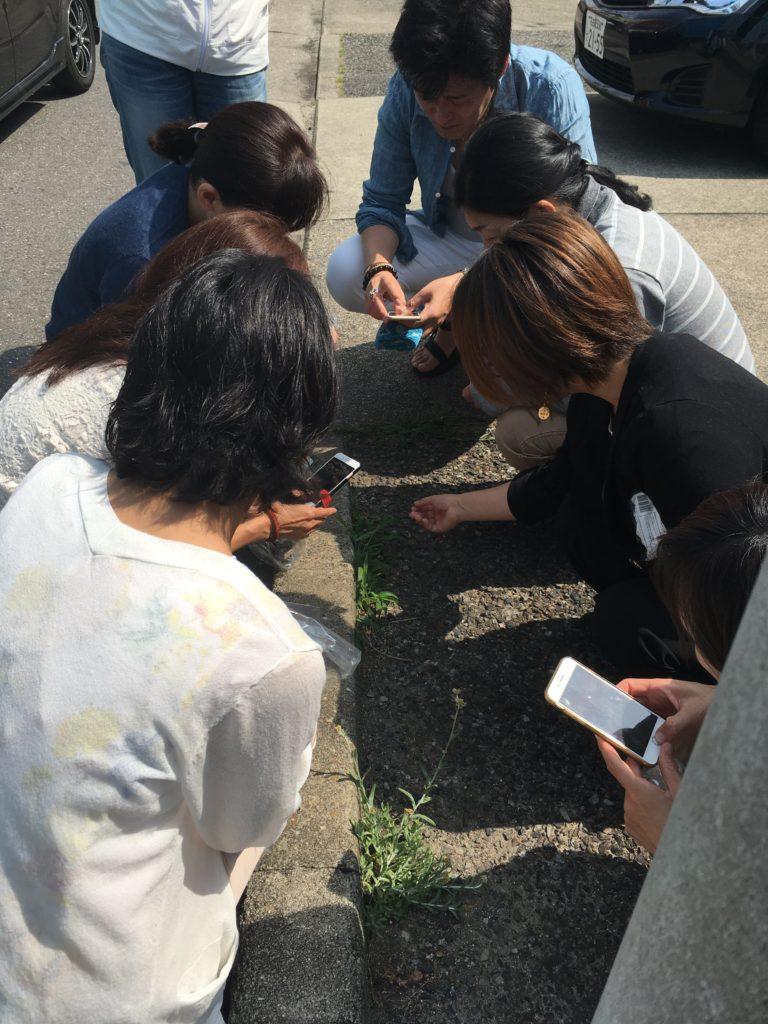 発酵と野草の学校