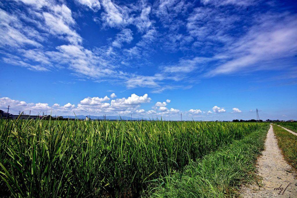 野草と発酵の学校が【厳選】した材料をご紹介いたします!