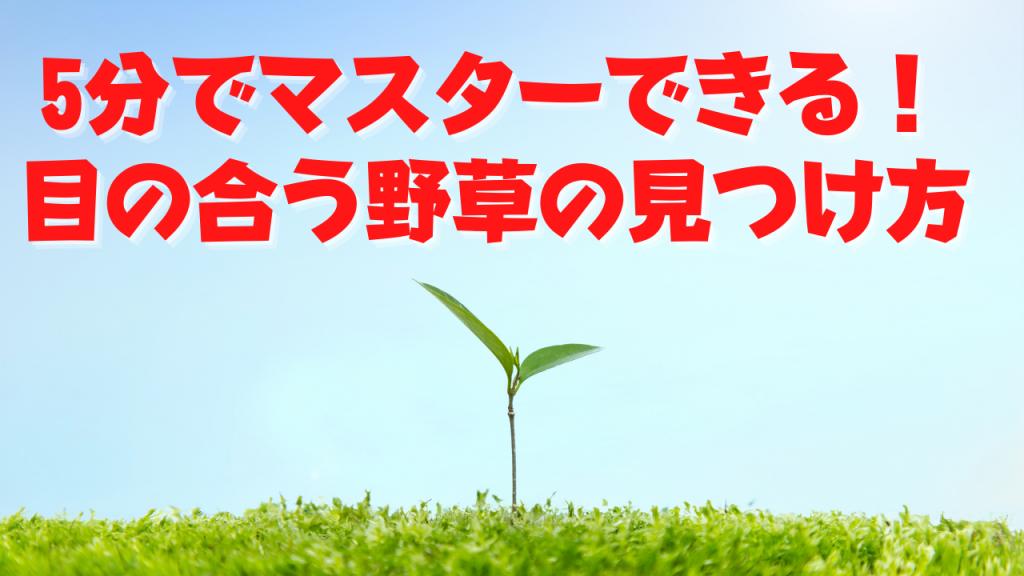 【5分でマスターできる!】目の合う野草!あなたの身体に必要な野草の見つけ方!
