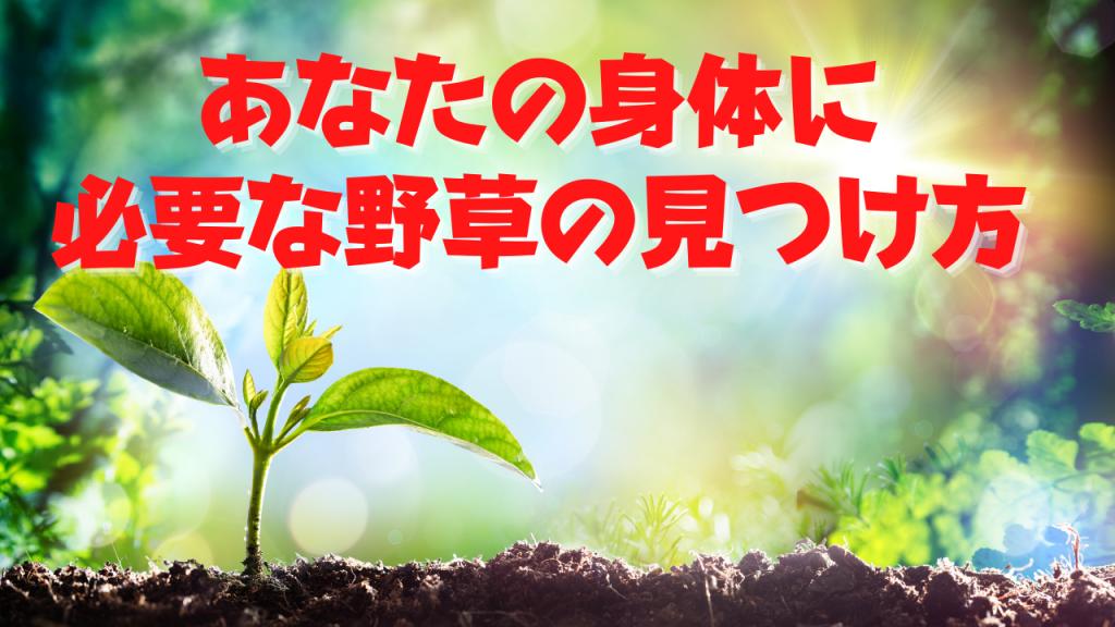 【無料で学べる!】あなたに必要な野草の見つけ方!